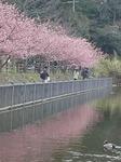 桜池.jpg